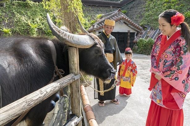 「この牛さん、パパより大きいね!」と、ちょっと離れたところから眺める