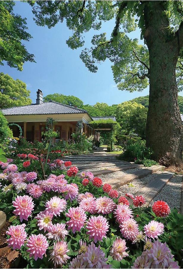 四季折々に咲く花も見どころ / グラバー園