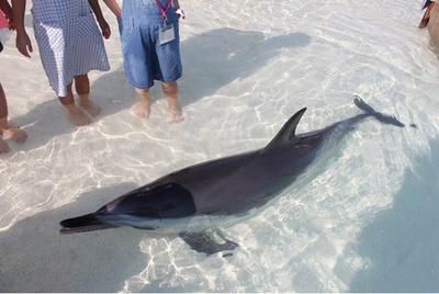 【写真を見る】イルカと間近で遊ぶことができる「あそびーち」/ 大分マリーンパレス水族館 うみたまご
