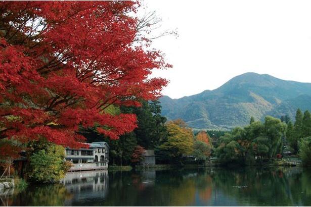 10月下旬~11月上旬は、紅葉が見ものに / 金鱗湖