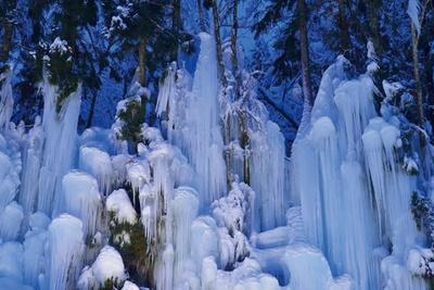 本来ならば山奥でしか見られない青だる。福地温泉では、沢の水を木々に吹きかけて作り上げている / 青だるライトアップ