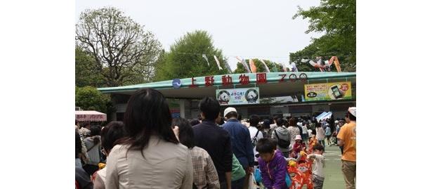 いよいよGW突入! 恩賜上野動物園(東京都台東区)では、入園に1時間待ち、さらにパンダ見学に1時間半待ちとなるほどの大盛況だ