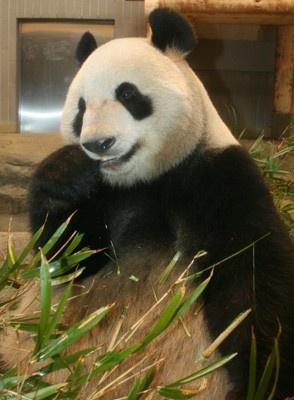 """【画像】お目当てはこのかわい~い""""パンダ""""!"""