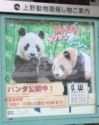 """やはり""""パンダ目当て""""に来た人が多いようだ"""