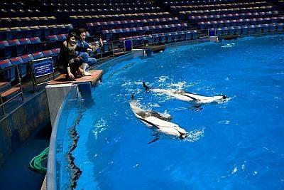自分のサインでイルカがジャンプ!「イルカトレーナー体験」