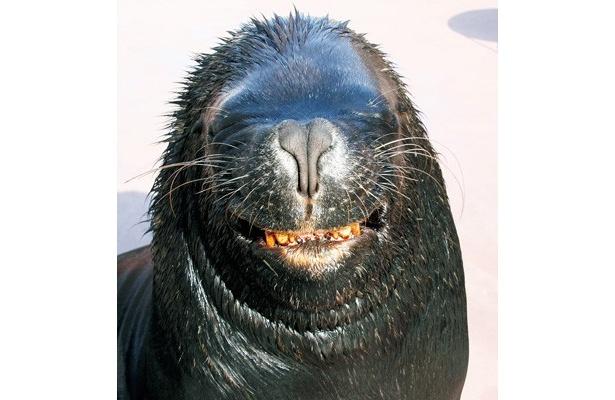 """今、水族館では大人も虜にするくいらいにキュートな""""スマイル顔""""の動物たちが人気を集めている"""