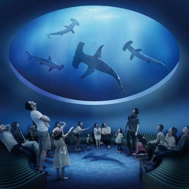 大型のサメの姿を見上げる形で楽しめる「神無月の景」/四国水族館