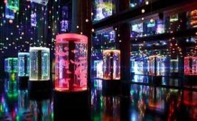 カラフルな光に照らされるクラゲが美しいジェリーフィッシュランブル