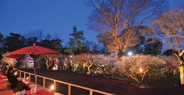 【写真を見る】梅苑では見事なライトアップも実施/北野天満宮