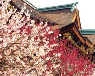 """華やかな""""梅""""鑑賞で一足早い春気分!冬の京都「北野天満宮」を巡るおすすめコース"""