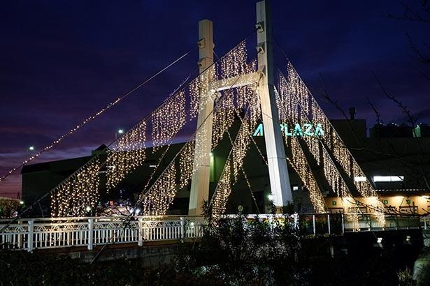 シャンパンゴールドに輝く花見橋