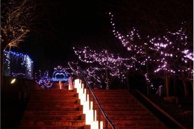 桜の花の夜間ライトアップとイルミネーションのコラボレーションはロマンチック