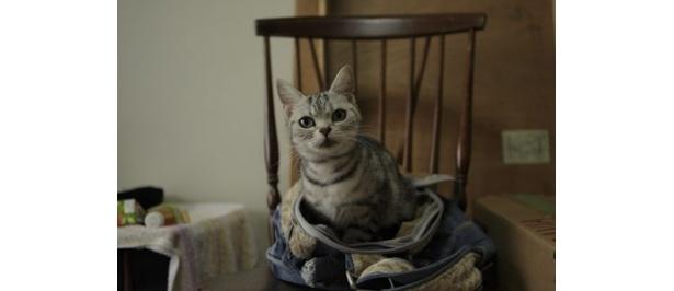 出会いと別れを描き、ネコ好きなら誰もが共感できるストーリーに仕上がっている