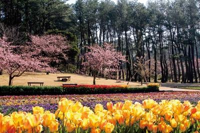 【画像を見る】フラワーパークで春の到来を感じよう / フラワーフェスティバル
