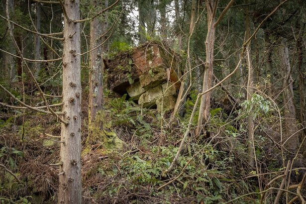 山の斜面にも、レンガ造りの痕跡を発見!「なにに使われたんだろう…」