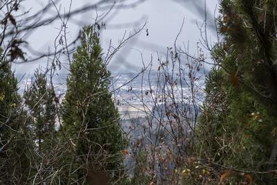 山頂から下山する道中、うっそうと生い茂る杉林の隙間から、小松市街地を眺望することができた