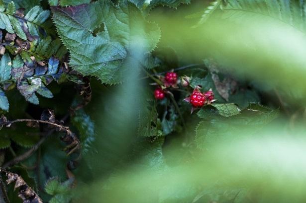 野花との出会いも。春から夏にかけては、広大な敷地に広がる豊かな自然を楽しむことができる