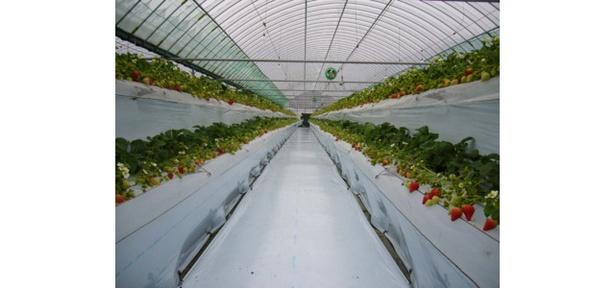 うきは果樹の村 やまんどん / ミネラル豊富な湧水と有機肥料で栽培