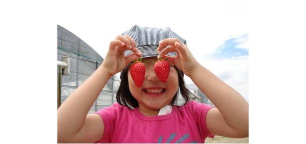 いちご狩り らいおん果実園 / 新鮮ないちごをたくさん摘み取ろう