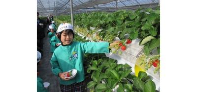 果実の国 COUPLES / 高設2段栽培で大人も子供も摘みやすい
