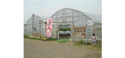 やっと見つけた!とっておきのイチゴ畑? / いちごのオリジナル商品も販売