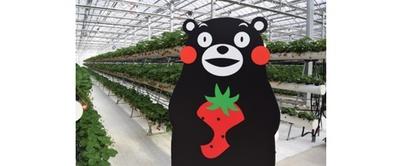 阿蘇健康農園 / 安心安全な旬のいちごを堪能しよう