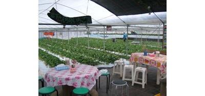 南阿蘇岩下さんちのいちご園 / セルフサービスのコーヒーや紅茶も無料提供