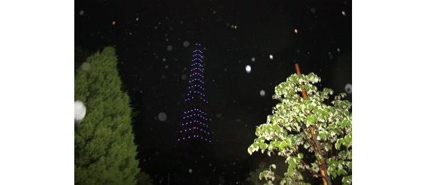 【写真】芝公園の中から見た東京タワー