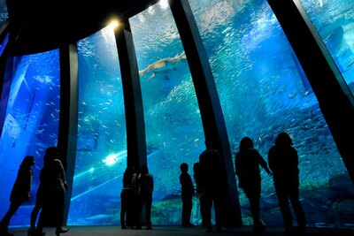 5万尾のイワシの群れが輝きを放ちながら泳ぐ、「アクアミュージアム」の大水槽