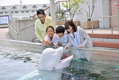 【写真】かわいいシロイルカが挨拶してくれる「ホエールオーシャン」。優しく背中にタッチしてみよう