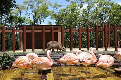 美しいフラミンゴや、愛嬌たっぷりのカピバラが出迎えてくれる「フォレストリウム」