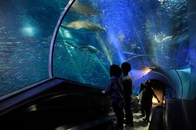 海の中にいるような、アクアミュージアム内にあるトンネル水槽「アクアチューブ」