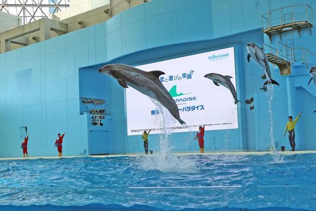 「アクアスタジアム」では、海の動物たちのショーを実施。イルカたちのダイナミックなジャンプは必見