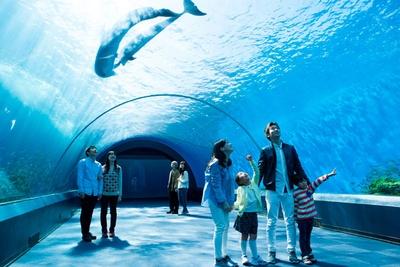 イルカたちがまるで空を飛ぶように泳ぎ回る、「ドルフィン ファンタジー」のアーチ水槽
