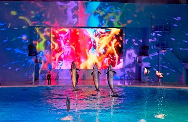 ナイトショー「LIGHTIA」のワンシーン。プロジェクションマッピングなどで演出されるイルカのパフォーマンスを堪能しよう