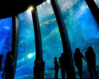 水族館に遊園地、魚釣り、BBQ… 横浜・八景島シーパラダイスの楽しみ方