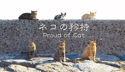 相島をはじめ、九州で撮影した作品を展示 / 森永健一写真展 ネコの矜持~Proud of Cat~
