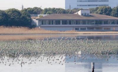 ラムサール条約で定められた 「世界湿地の日」