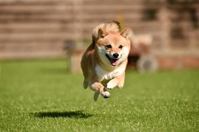 「犬」は「ケンケン」から!? 鳴き声に由来する動物漢字