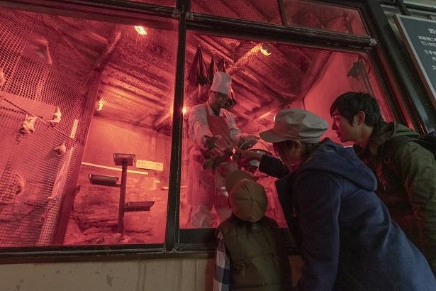 赤いライトの部屋の中で、なにかがバサバサと飛び回っている