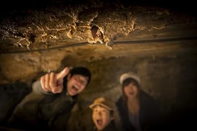 野生のコウモリを発見!「さっき見たフルーツコウモリより、ずっとずっと小さいね」
