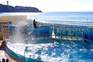 「新江ノ島水族館」の楽しみ方、イルカ&アシカショーから最先端の深海研究まで!