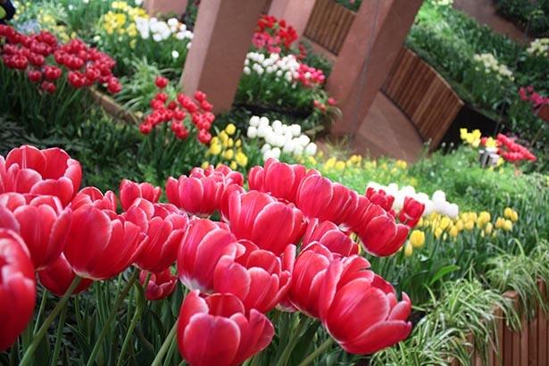 鮮やかに咲き誇る花々は必見。かぐわしい香りにも注目を