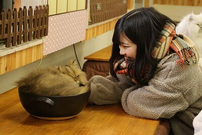 【写真】土鍋に入るネコが愛らしい