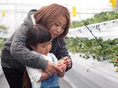 親子で収穫する楽しさを体感できる