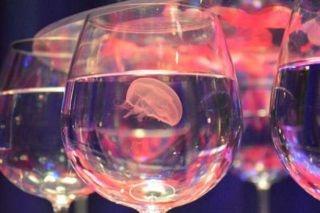 """「新江ノ島水族館」でバレンタインイベント『恋する""""えのすい""""』開催中!"""