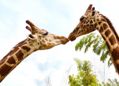 動物園に併設しているからこそのアクティビティも登場