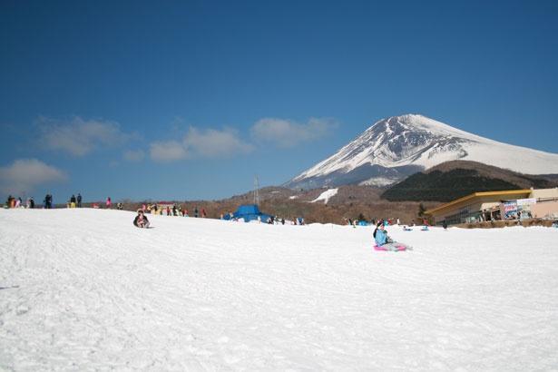雄大な富士山を眺めながらソリ遊びを満喫しよう