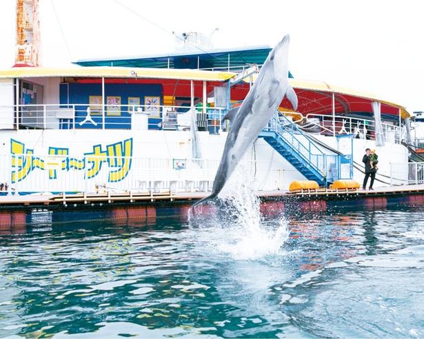 目の前でイルカがジャンプする瞬間を見ることができる / わくわく海中水族館 シードーナツ