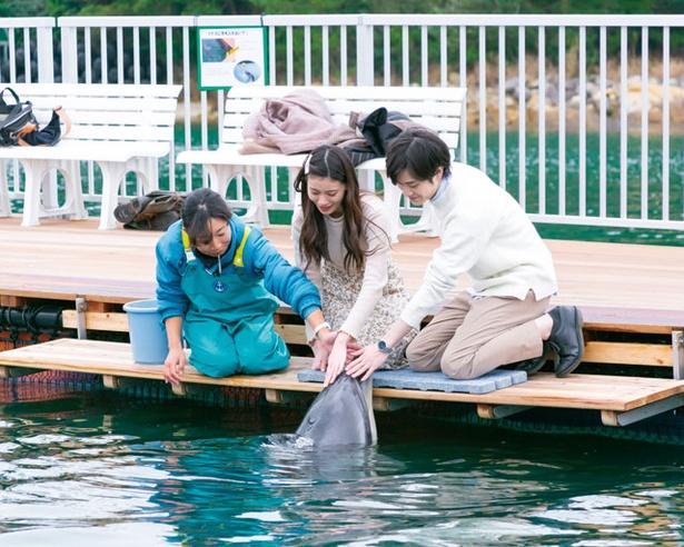 【写真を見る】イルカのふれあい(1人500円・税込)では、イルカに最接近! / わくわく海中水族館 シードーナツ